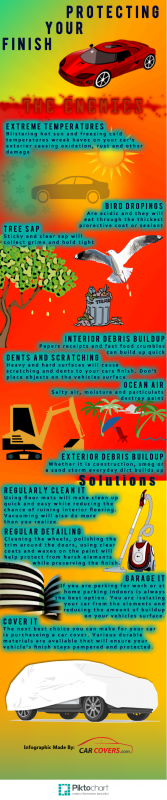 Auto Detailing & Car Protection Infographic