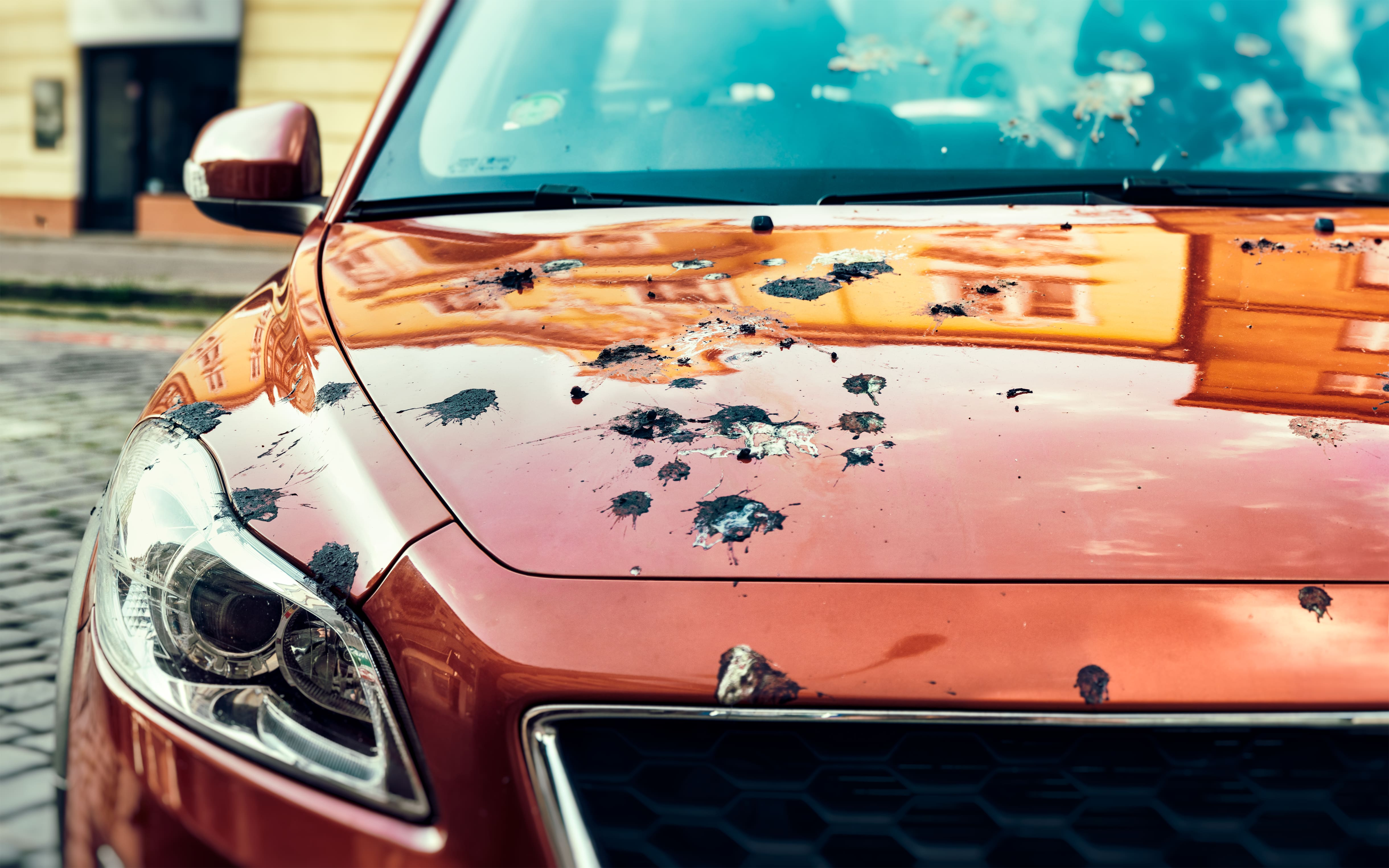 car-covered-bird-droppings