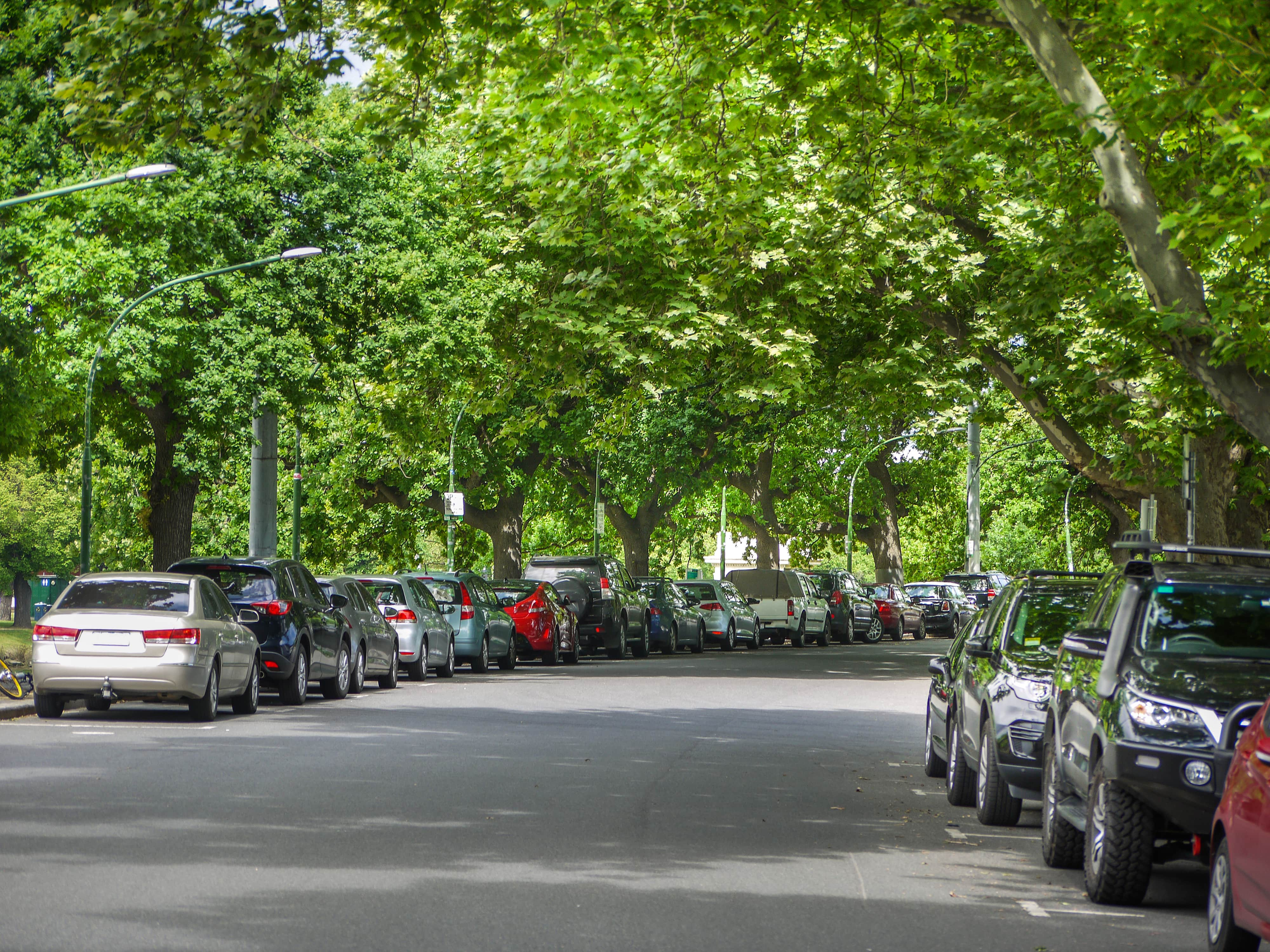 many-cars-parked-lined-under-trees
